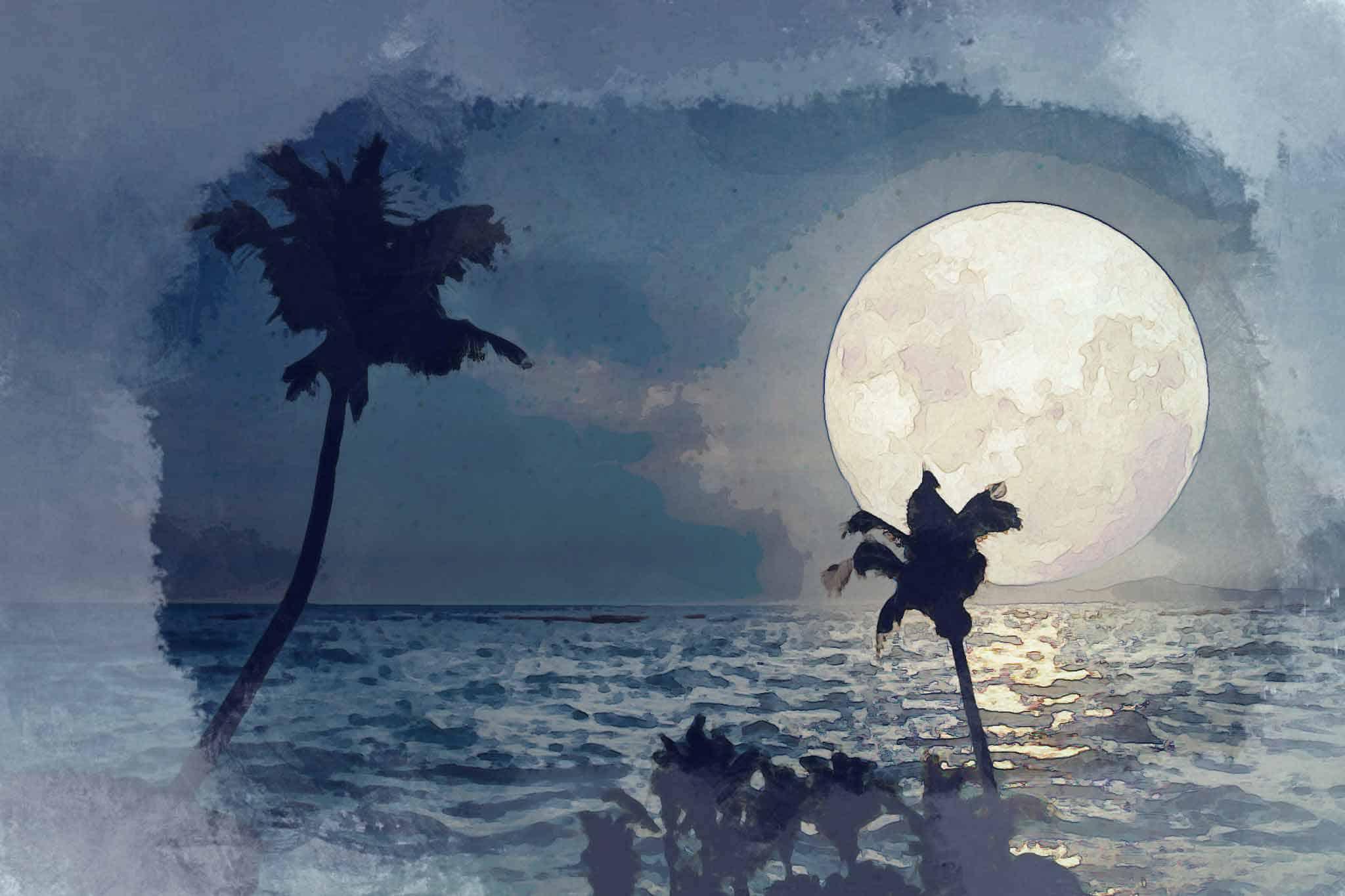moon night tree sea