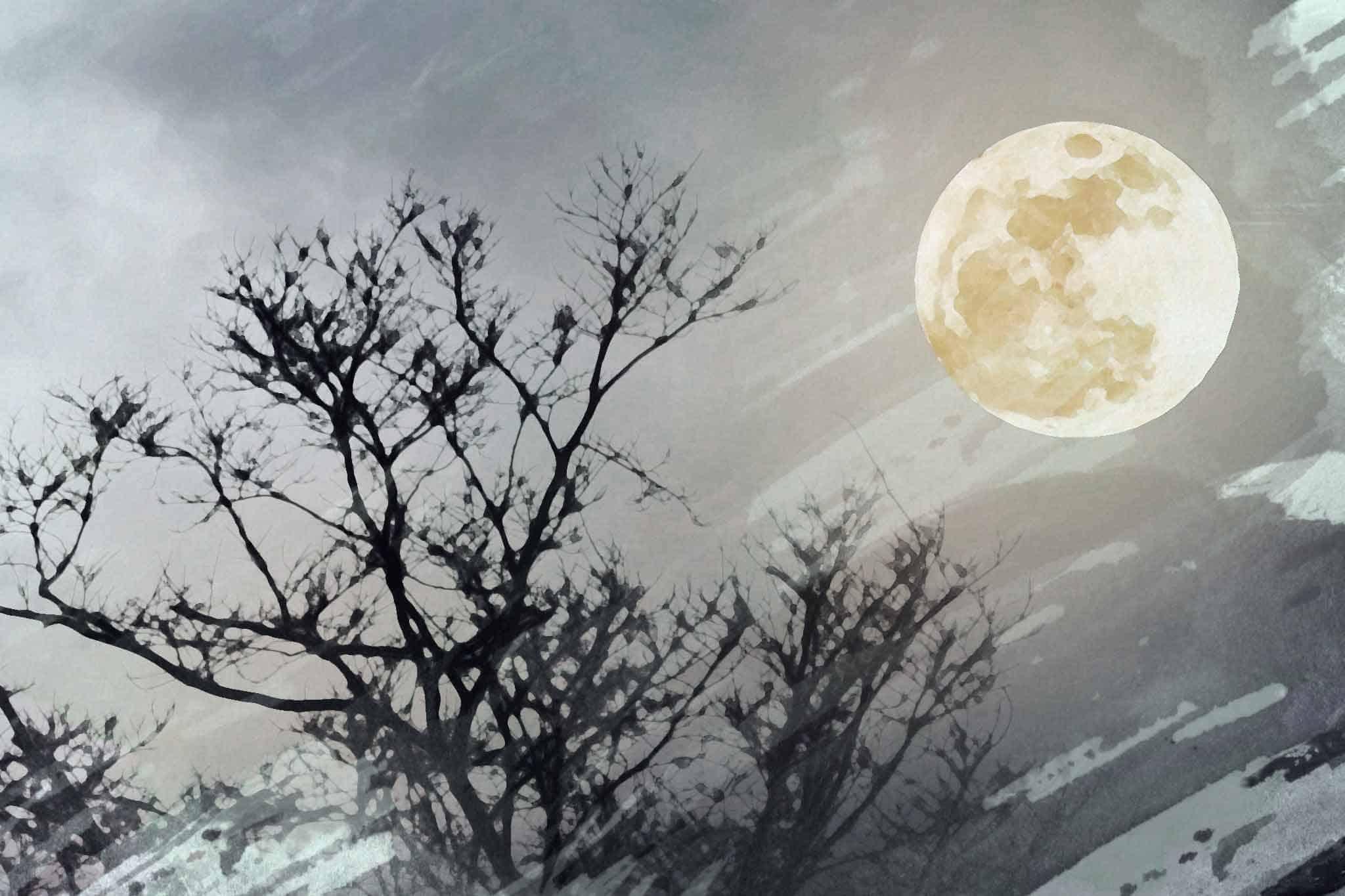 moon night tree silverf