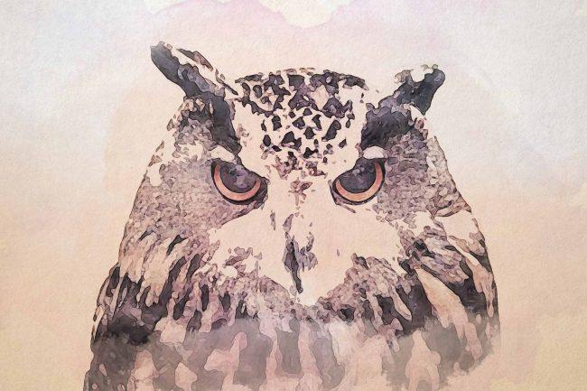 owl ash angry portrait