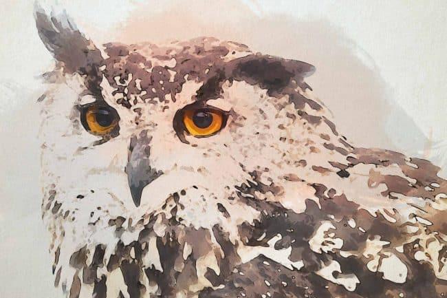 owl ash close up