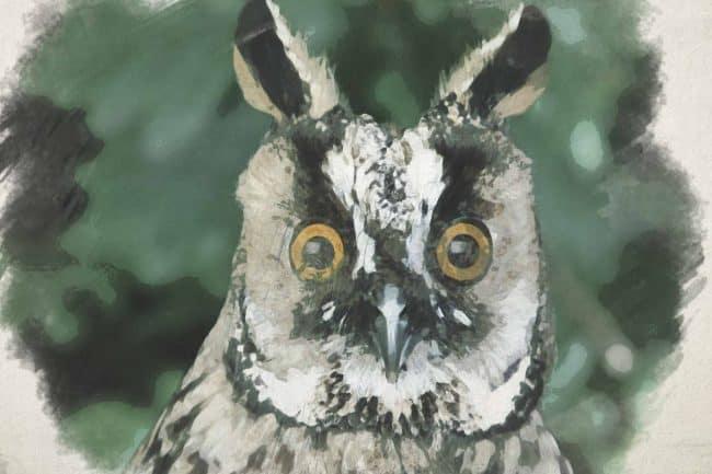 owl green ash