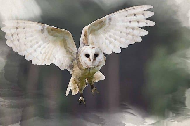 owl green flying white