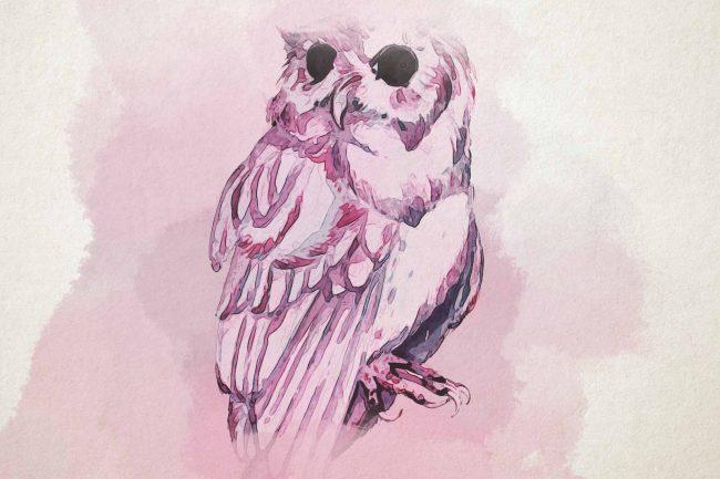 owl pink watercolor