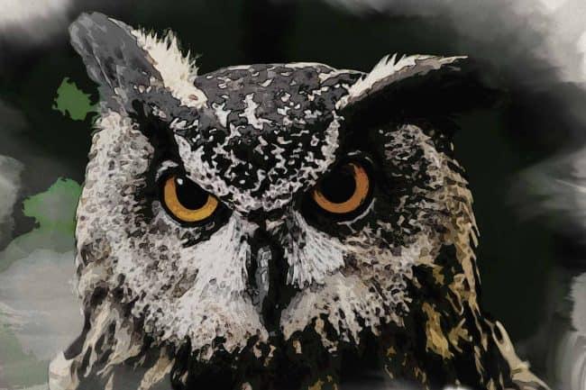 owl seating ash black green