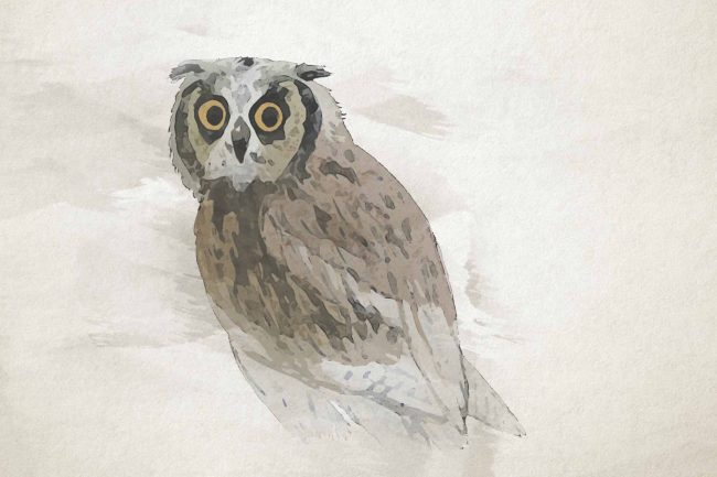 owl seating ash yellow