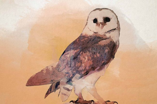 owl seating orange
