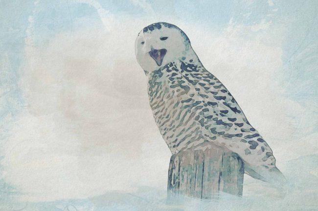 owl seating tree lodge