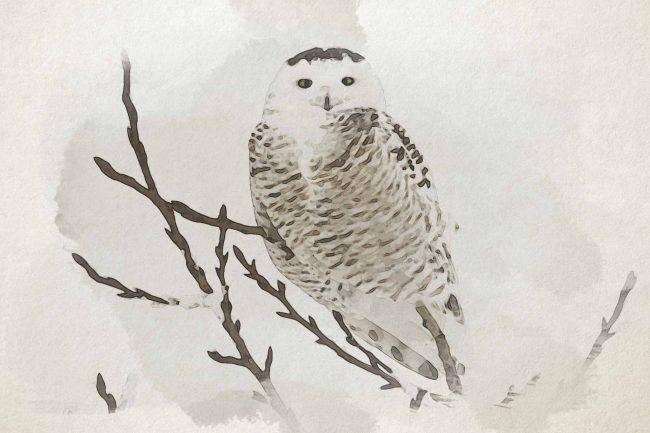 owl seating tree white
