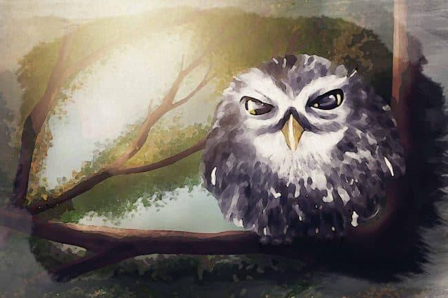 owl tree night