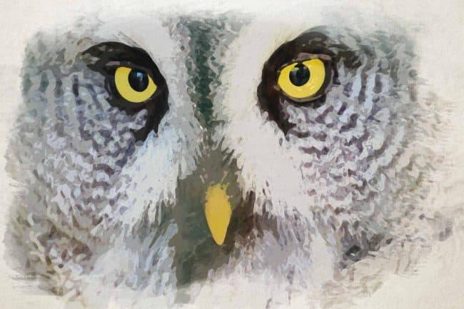 owl white ash portrait