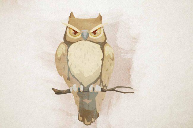owl yellow angry