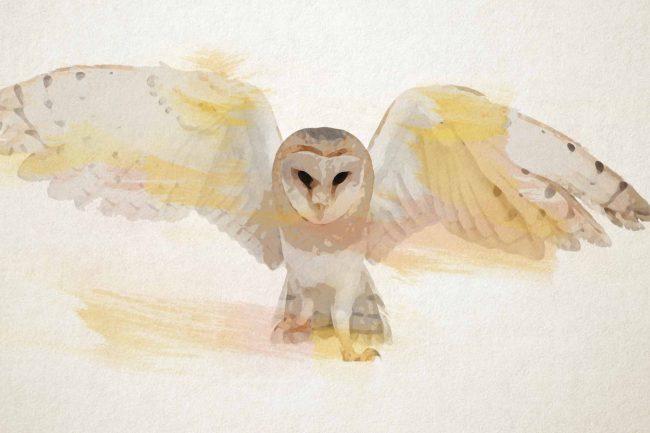 owl yellow flying