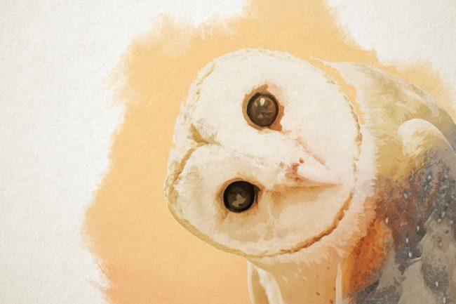owl yellow orange