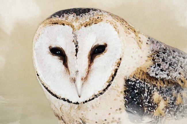 owl yellow portrait
