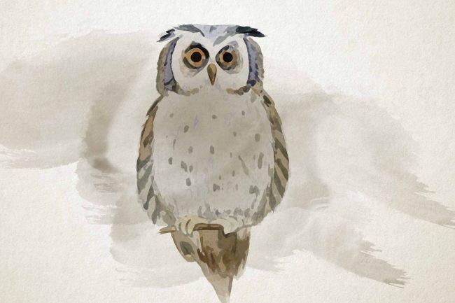 owl yellow watercolor