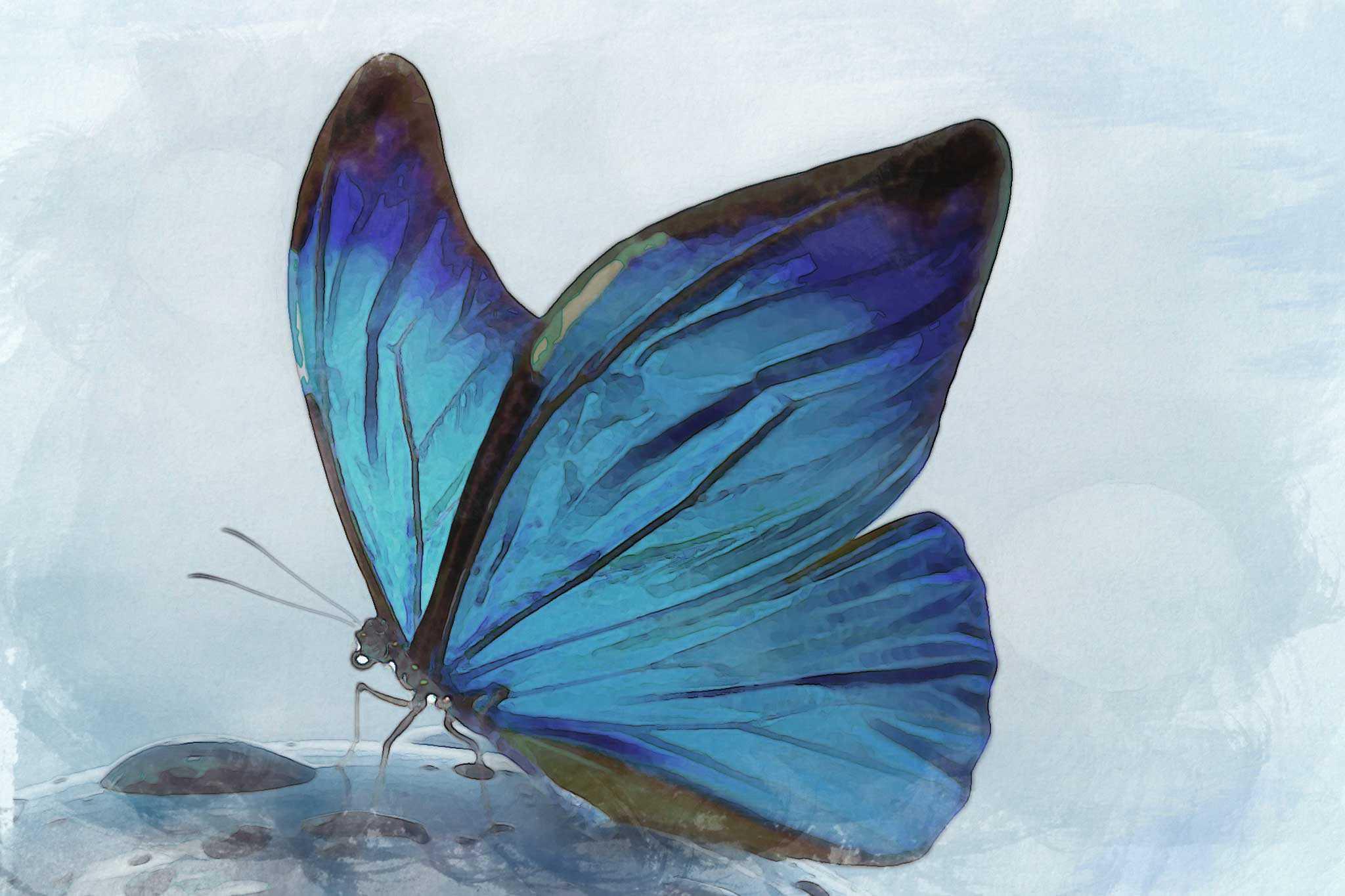 purple teal glow wc butterfly