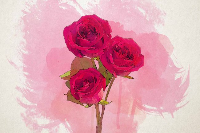 rose red pink single