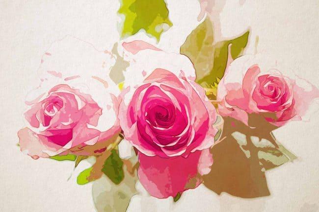 rose three pink flower