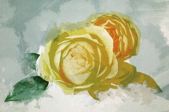 rose yellow set flower