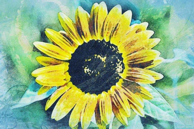 sunflower green blue