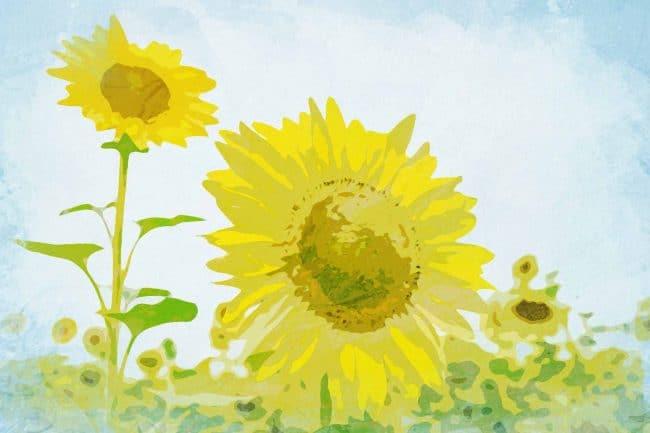 sunflower green yellow