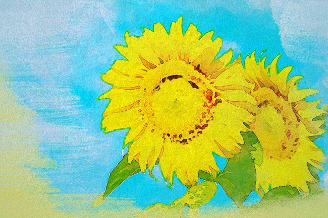 sunflower yellow blue green