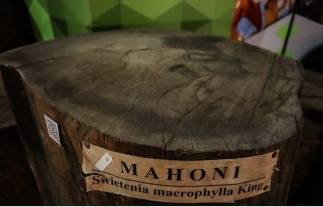 swietenia macrophylla king mahogany wood