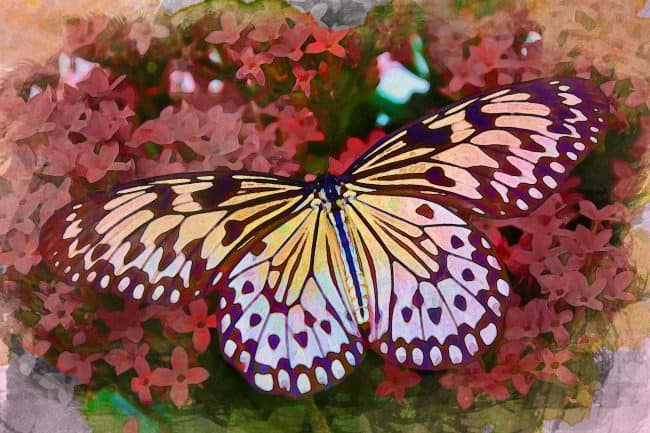 butterfly watercolor artistic approach
