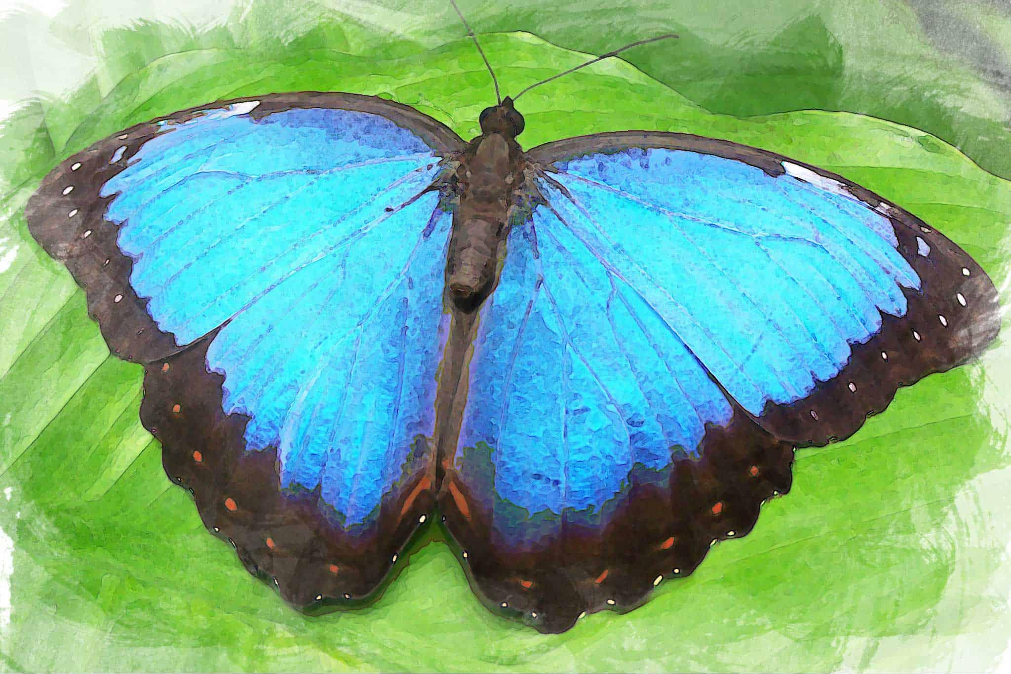watercolor butterfly big blue