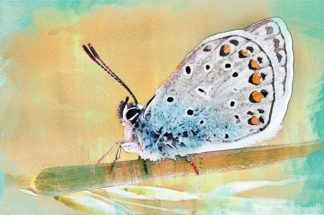 watercolor butterfly big white