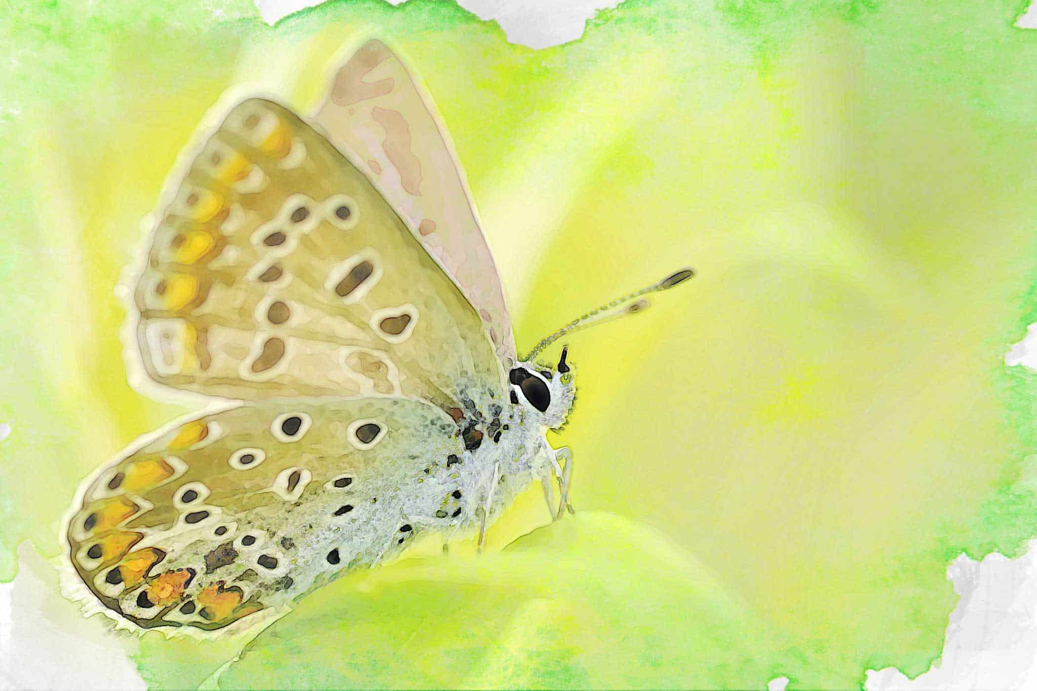 watercolor butterfly bright yellow