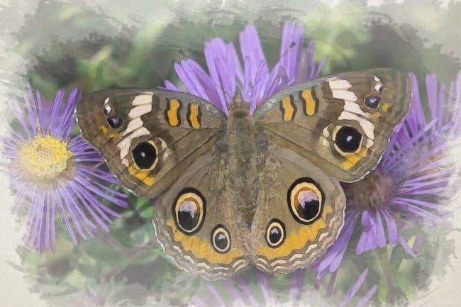 watercolor butterfly gold purple
