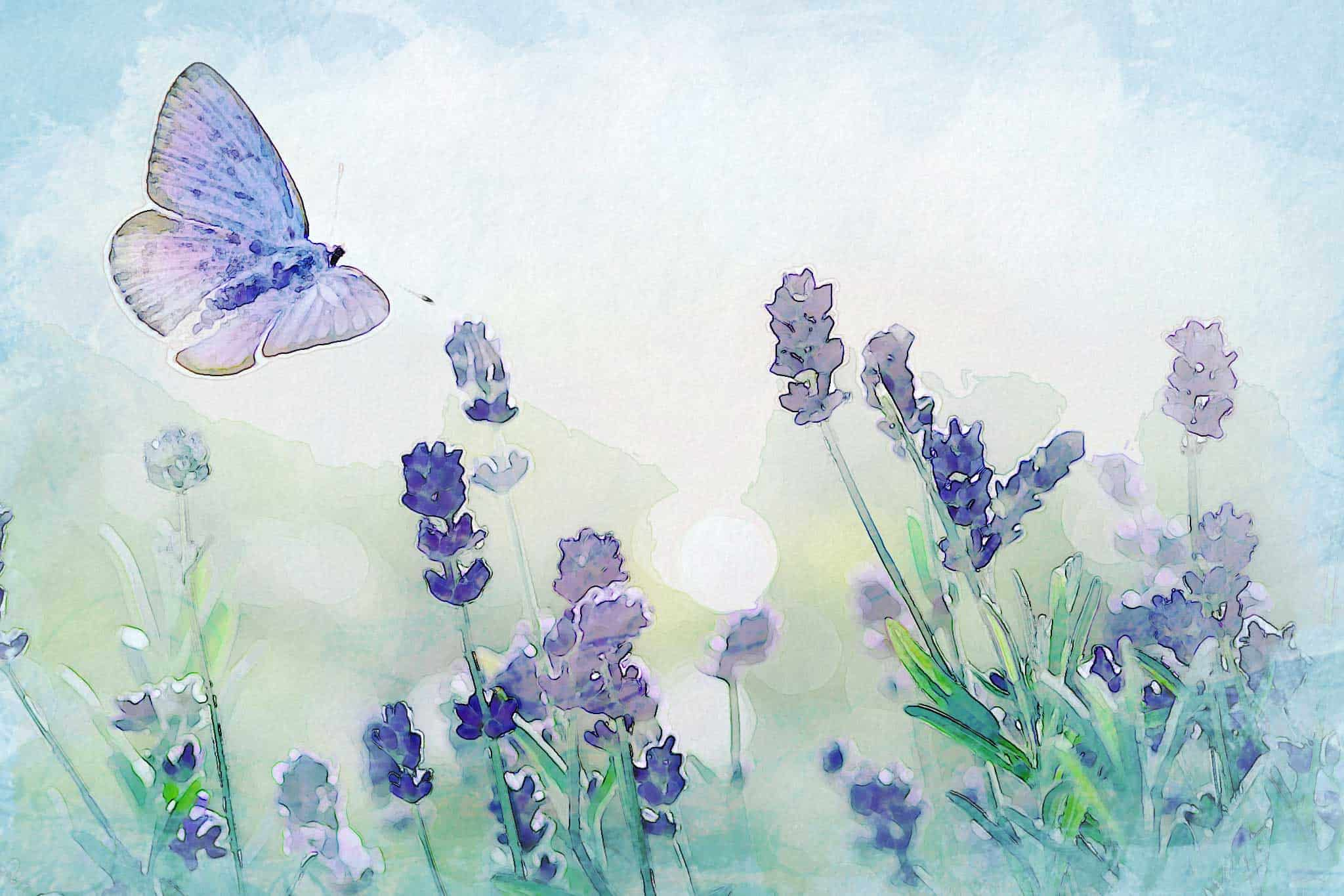 watercolor butterfly lavender