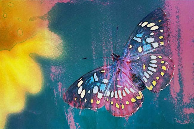 watercolor butterfly neon night