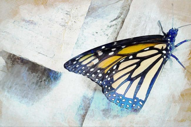watercolor butterfly on wood
