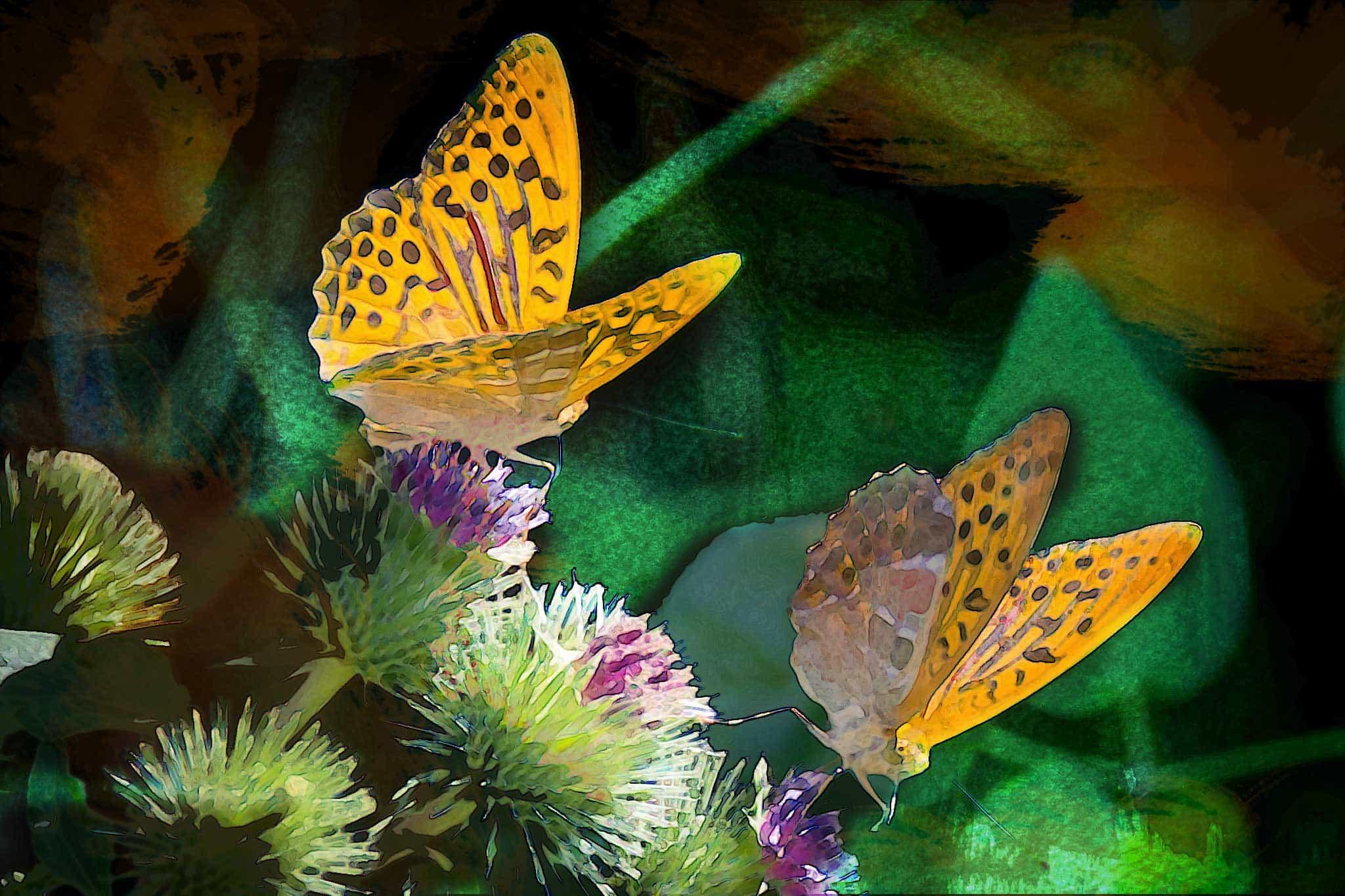 watercolor butterfly orange on black