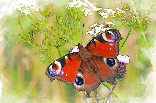 watercolor butterfly orange on green
