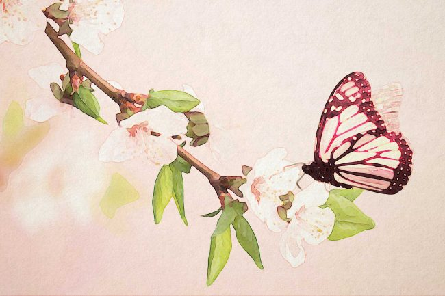 watercolor butterfly pink blossom