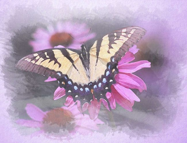 watercolor butterfly pink flower