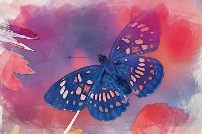 watercolor butterfly red glow