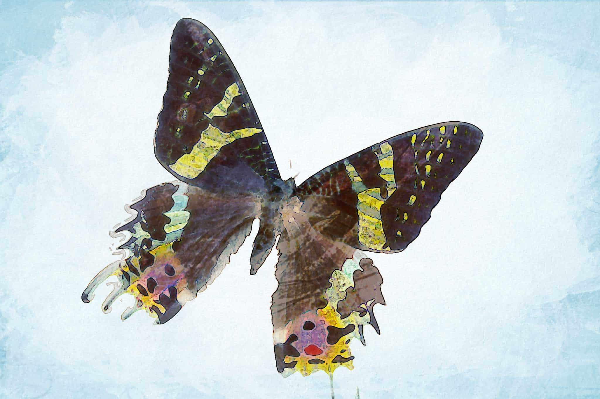 watercolor butterfly solo flight