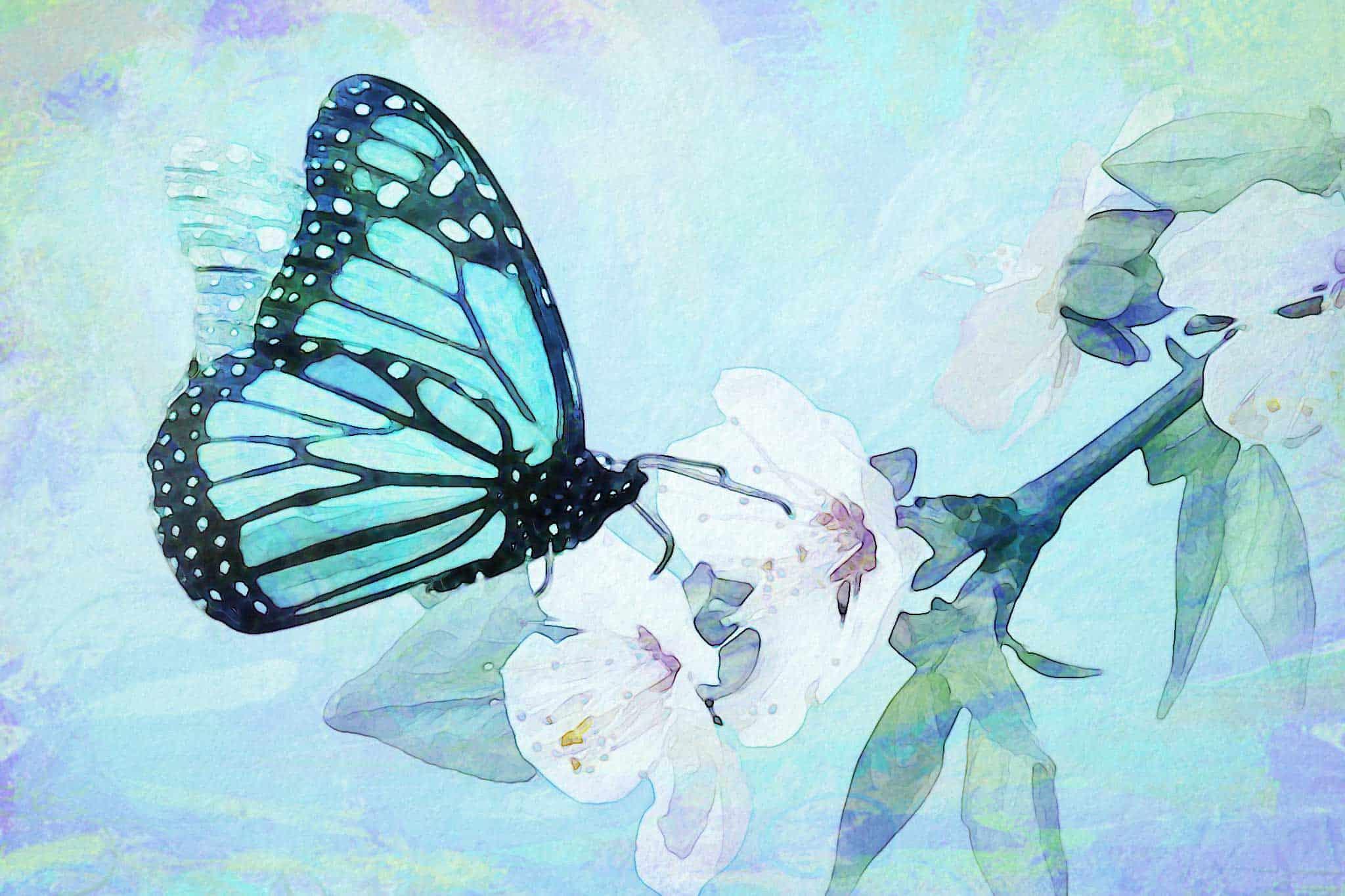 watercolor butterfly white flower