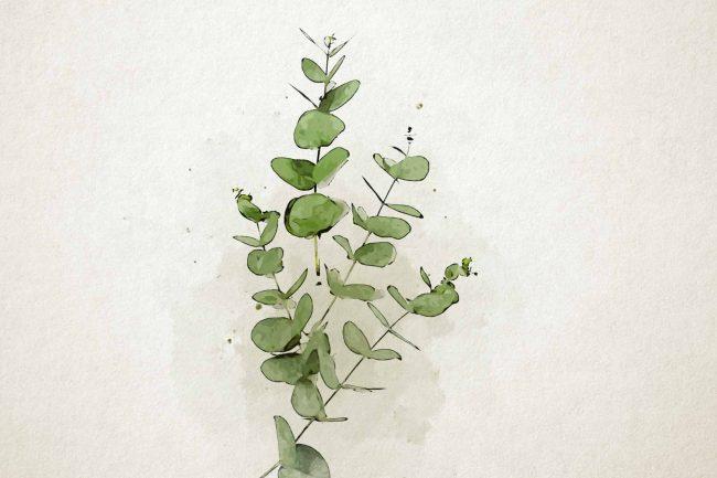 watercolor eucalyptus 12 green