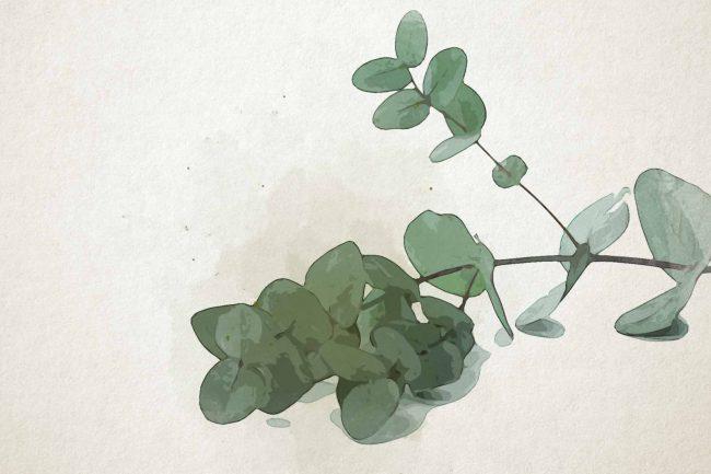 watercolor eucalyptus 15 green