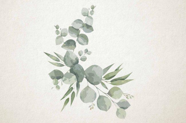 watercolor eucalyptus 19 green