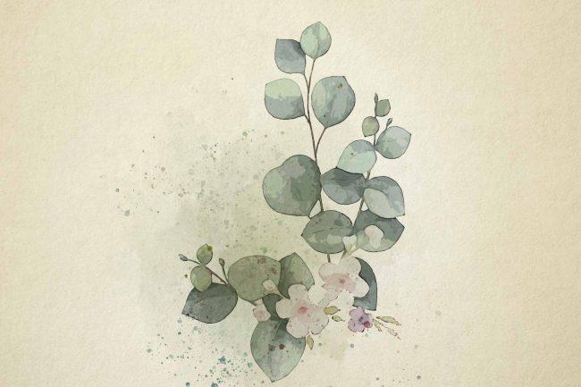watercolor eucalyptus 2 green