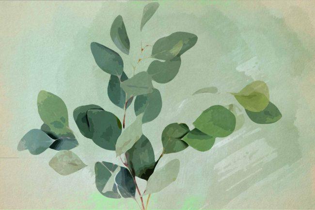 watercolor eucalyptus 7 green