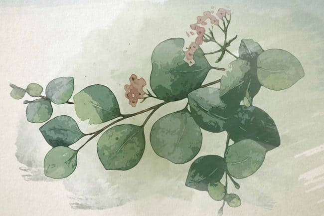 watercolor eucalyptus small red and white flowers