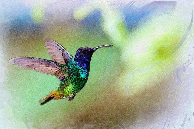 watercolor hummingbird blue green