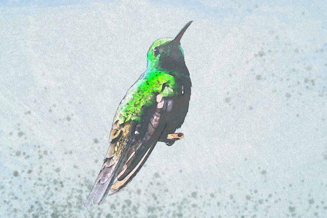 watercolor hummingbird green paper